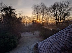A Hard Frost has Fallen (Henry Hemming) Tags: frost garden sunrise sun trees orchard autumn cold chill dark early daytime