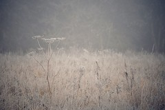 Beige (Nige H (Thanks for 7.5m views)) Tags: nature winter frost field beige landscape plant england