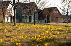Wild Spring Flowers in the Park (Photo Dean) Tags: park flowers usa yellow utah spring ut daybreak 2012 southjordan orchardpark saltlakecounty daybreakutah