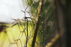 HFF - Good Friday Edition (Nanagyei) Tags: fence wire dof bokeh sony friday goodfriday greatfriday hff a700 chipperfieldwoods