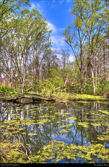 Dreamy Day (Western Maryland Photography) Tags: blue sky reflection green nature easter outdoors spring pond westvirginia vegetation april environment algae mineralcounty singleexposurehdr newcreek