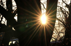 Sunrise Across a Tree - #13042012-IMG_8386a (photographic Collection) Tags: morning sky sun tree sunrise canon rebel golden photographic collection hour 365 rise goldenhour sarma 550d kalluri t2i mygearandme photographiccollection bheemeswara bkalluri bheemeswarasarmakalluri branchesrays
