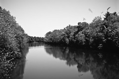 upstate downriver (dalioPhoto) Tags: blackandwhite bw newyork reflection 120 film nature water horizontal analog mediumformat river landscape blackwhite pentax upstate seeds 67 daliophoto marcdalioall