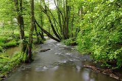 Die Oster (NatureArt by Wolfgang) Tags: forest die im das wald bei saarland aue oster fürth auental ottweiler