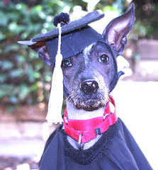 """Oliver diploma • <a style=""""font-size:0.8em;"""" href=""""http://www.flickr.com/photos/95808399@N03/8758147531/"""" target=""""_blank"""">View on Flickr</a>"""