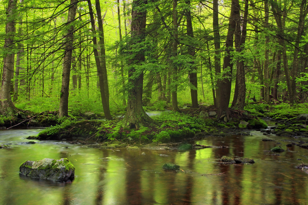 Spruce Run (Revisited) (2) by Nicholas_T, on Flickr