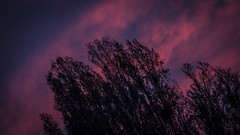 Atardecer (Nicols Robles Fritz) Tags: trees sky backlight clouds atardecer twilight arboles cielo nubes