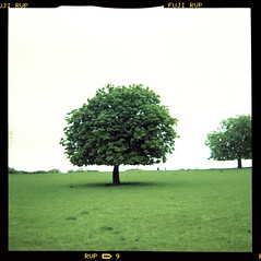 spring horse chestnut (pho-Tony) Tags: color colour 120 6x6 film square xpro fuji cross crossprocess shift plastic velvia roll process e6 glitch reflector 620 rvp rollfilm iso50 586 kodakbrowniestarmatic fujirvp brownieflash20 6cmx6cm kodakbrownieflash20 rvp586