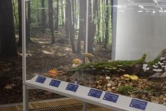 """Ausstellung """"Pilze: Netzwerker der Natur"""""""