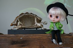 Tippi and Turtle - And now Blythe a Day 23 May 2014 - Turtle