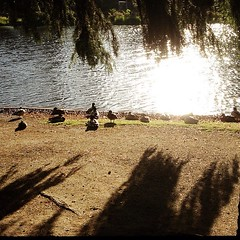 "#morning #sunlight #ducks I think the demolition starts next week once the milk carton boat races are over. The ducks are going to have move to the casting pond for the rest of the summer! #watershed #stream #restoration #crystalsprings • <a style=""font-size:0.8em;"" href=""https://www.flickr.com/photos/61640076@N04/8964887807/"" target=""_blank"">View on Flickr</a>"