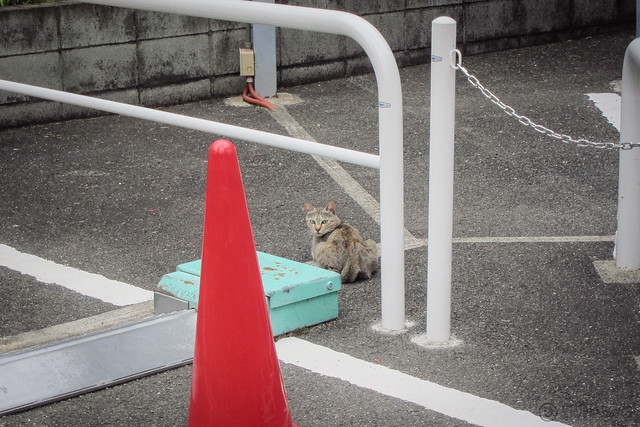 Today's Cat@2013-06-19