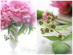 Paeonia and Brambles (Simply Stated) Tags: pink flowers diptych rebeccalewisphotography