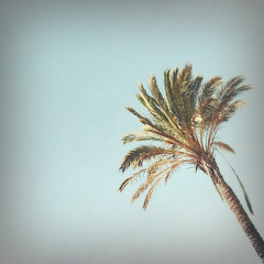 Palm (Sarah Cowan's mix of photo love) Tags: portugal vintage retro palmtree textured