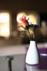 Flower (alexchalatsis) Tags: pink flower color glass table 50mm dof bokeh vase canonef50mmf18ii