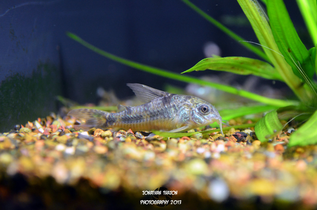 The world 39 s most recently posted photos of aquarium and for Maryland freshwater fish