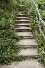 Escalera en la Senda Norte (Oscar F. Hevia) Tags: sendanorte senderisno escalera vegetación mantenimiento luanco gozon asturias lamofosa playademoniello moniello asturies principadodeasturias lluanco ofh paraísonatural naturalparadise paraisonatural