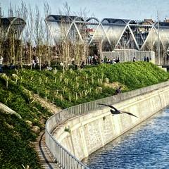Madrid - Puente de la Arganzuela y Gaviota - Madrid - Arganzuela's bridge and seagull (COLINA PACO) Tags: madrid españa río river spain seagull gaviota ríomanzanares manzanaresriver