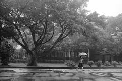 Taipei, Taiwan  台北、台湾 (- yt -) Tags: taiwan taipei 台北 台湾 shorttrip goldenweek travelphotography fujifilmx100t