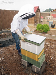 Langstroth Hive (gapey) Tags: italian backyard bees inspection beehive honeybees sugarsyrup italianbees italianhoneybees backyardbees