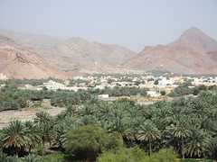 Oasis somewhere in Oman!