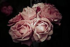 Still Loving (toletoletole (www.levold.de/photosphere)) Tags: fuji fujixpro2 schweiz weggis xpro2 balkon balcony flowers blumen blten blossoms