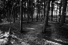 Find Your Path (JamieHaugh) Tags: formby liverpool trees wood path blackandwhite blackwhite monochrome outdoor outdoors