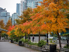 vancouver fall colors (heinz41) Tags: epl7 olympus panasonic pl35100mmf456 fall fallcolors coalharbour vancouver trees