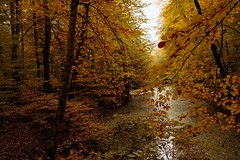 Magical autumn... (RKAMARI) Tags: yedigllernationalpark autumn colour forest lake landscape nature outdoor serenity travel warm water