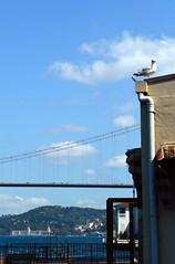 A seagull and the Bridge (Ali Enes M.) Tags: nikon dslr d5100 istanbul stambol stambul stambule turkey trkiye turecko trkei turcji turcja trk turk skdar kuzguncuk boaz boazkprs bosphorus yaz lato summer sommer 2016 new fresh yeni eyll september 8thofseptember 2bin16