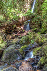 Merriman Falls (acheron0) Tags: nationalpark olympic quinault rainforest tonemap waterfall