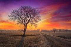 Colours of fall (Bernhard Sitzwohl) Tags: magic colour colours sunset colourful magiccolours tree field solitarytree path leadinglines nature landscape joyoffall autumn del