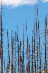 Remnants of 2015's Excelsior Wildfire at Medicine Lake (Jade Prints) Tags: jasper canada rocky mountains rockies alberta medicinelake