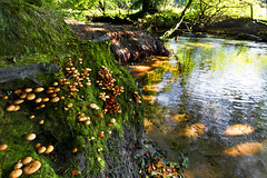 Fungi pool (Through Bri`s Lens) Tags: cornwall golithafalls fungi stream riverfowey falls water trees brianspicer canon5dmk3 canon1635f4