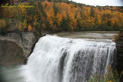 IMG_9614 (Sally Knox Sakshaug) Tags: letchworth state park new york fall autumn october colors leaf leaves orange yellow stone grey gray brown green red beautiful pretty scenic gorge ravine cliff wall edge side river water valley deep crevice waterfall white spectacular falls beauty middle large major mighty strong powerful impressive awe inspiring genesee portagecanyon