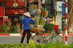 Patience (Hanoi North End) Tags: hànội hanoi vietnam flowers flowerseller streetseller bicycle conicalhat pentax pentaxlife pentaxart smcpentaxdfamacro100mmf28wr 764000 925 sunflowers việtnam