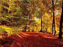 Autumn at the Lake Uklei (Ostseetroll) Tags: deu deutschland geo:lat=5418670167 geo:lon=1064420124 geotagged schleswigholstein sielbeck ukleisee herbst autumn autunmnleafcolor lakeuklei bäume trees