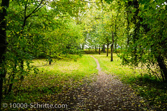Blick aus dem Wald (10.000 Schritte) Tags: wald natur grn herbst pflanzen drausen wandern pfad waldweg bume