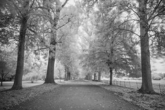 (Attila Pasek) Tags: koodr72 nikond600 oxford university avenue infrared longexposure longexposuretime park path tree