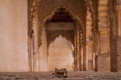 like a rolling stone (_esse_) Tags: morocco pietra stone moschea mosque abbandonata decay deserted