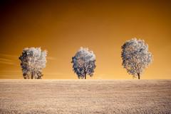 IR Trio-1.jpg (countchristo) Tags: ir720 infrared trees sonya300