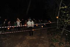 La-magia-del-bosco-di-notte-2016-53