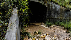 Into the Void (danielledufour430) Tags: forest stormdrain void abyss darkness ominous graffiti concrete foliage