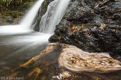 Falling... Swirling... Flowing (Ed.Stockard) Tags: explore waterfall stream leaves swirling orcasisland moranstatepark wa washington autumn creek motion