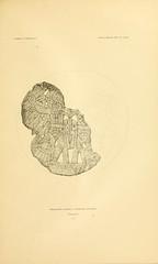 n230_w1150 (BioDivLibrary) Tags: antiquities indianart indians shellsinart smithsonianlibraries bhl:page=11258831 dc:identifier=httpbiodiversitylibraryorgpage11258831 manyhatsofholmes taxonomy artist:name=katecliftonosgood