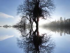 Dream (Tobymeg) Tags: dream tree sky scotland panasonic dmcfz72 beyond