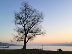 Zrisee - Lake Zurich (lvalgaerts) Tags: switzerland schweiz mountain zrisee lake zurich evening sunset tree orange