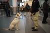 Sit (dtanist) Tags: nyc newyork newyorkcity new york city sony a7 canon fd 50mm staten island ferry siferry manhattan harbor whitehall terminal k9 canine dog sit sitting handler