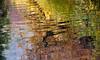 River Teign at Steps Bridge, Devon 34 (chris-parker) Tags: river teign devon steps bridge dunsford stepping stones village autumn