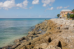 Natural Coral Foreshore, Speightstown, Barbados. (Bill E2011) Tags: sea water coral tropical barbados caribbean geology